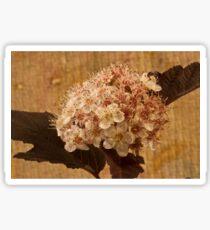 Bronze Leafed Spirea Blossom Macro  Sticker