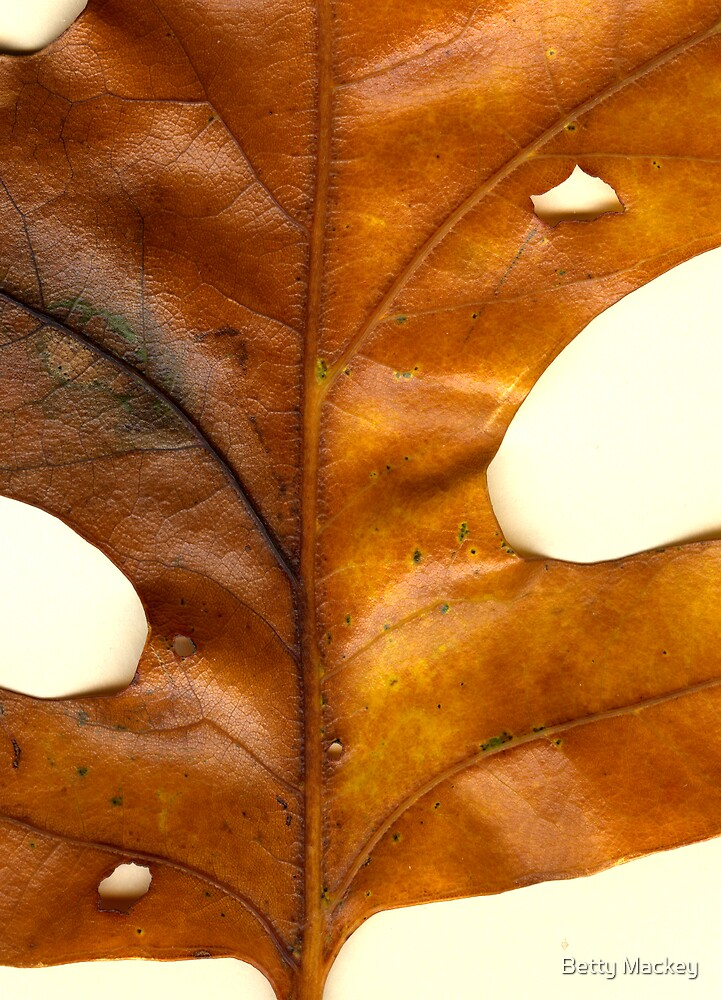 Oak Leaf View by Betty Mackey
