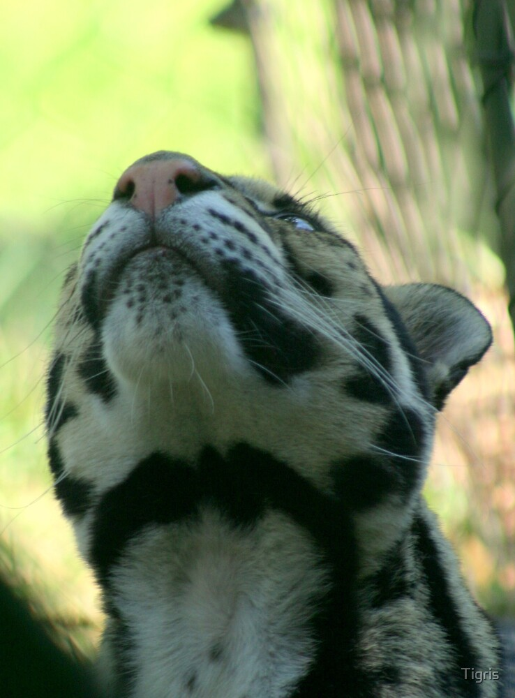 What's up there? by Tigris