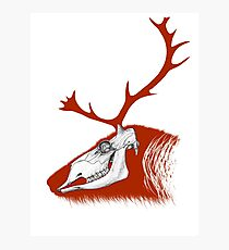 Rudolph the Red Reindeer Photographic Print