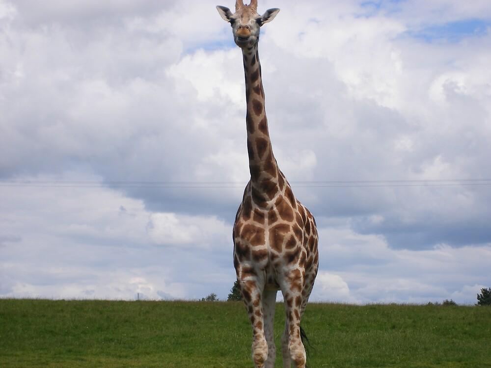 Standing Tall by Patrick Ronan