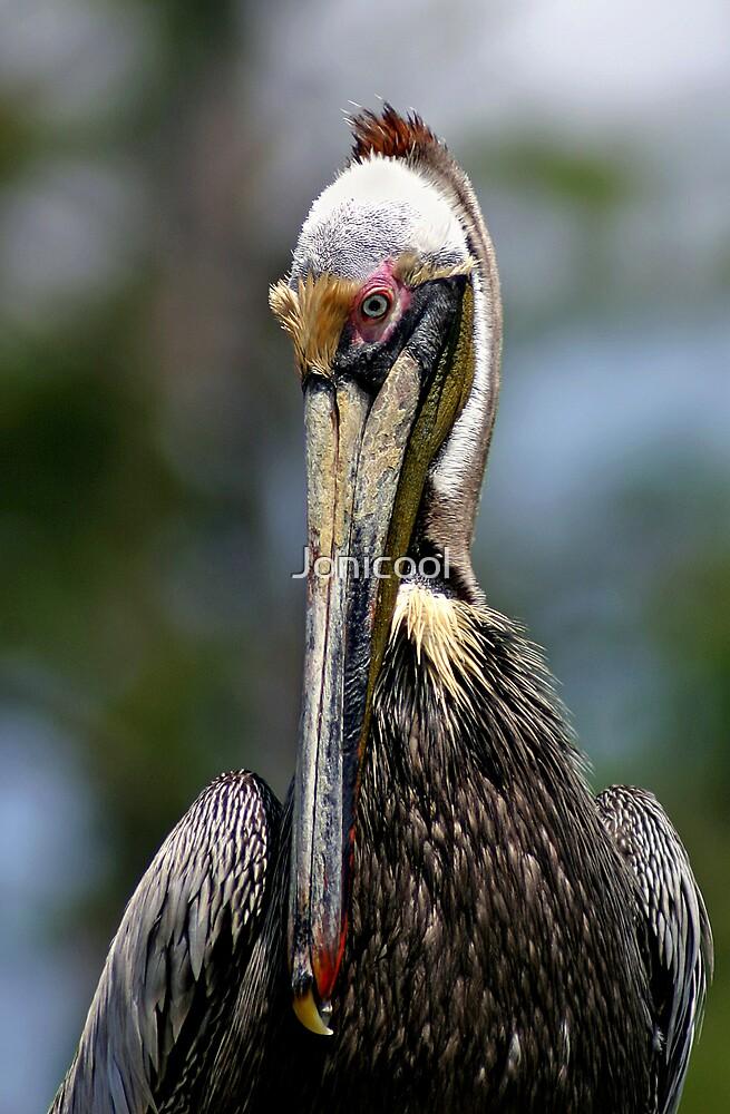 Colorful Pelican by Jonicool
