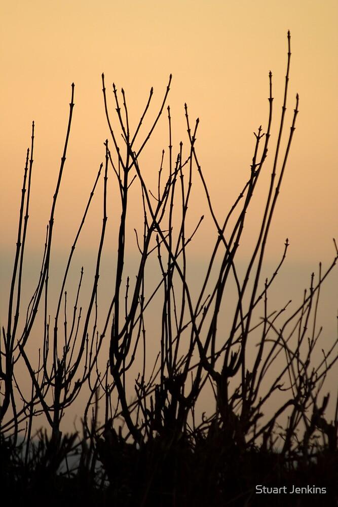 Sunset Silhouette by Stuart Jenkins
