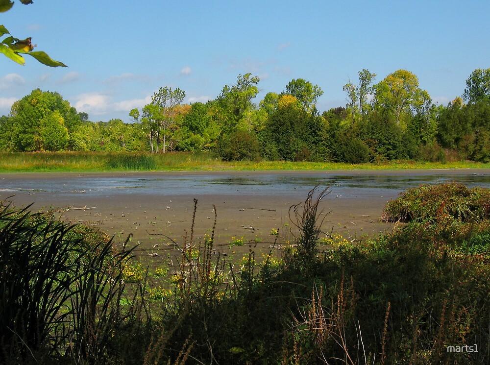 Oshawa Marsh by marts1