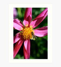 Oh where oh where could my honey bee? Art Print