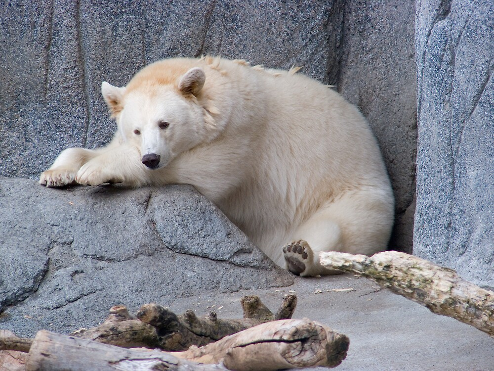 White Black Bear Blues by Geoffrey