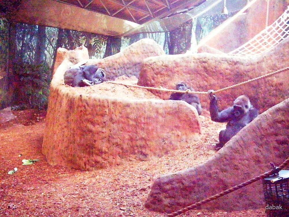 Chimpaze by dabak