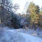 5 Mile Woods by Abigail Jennings
