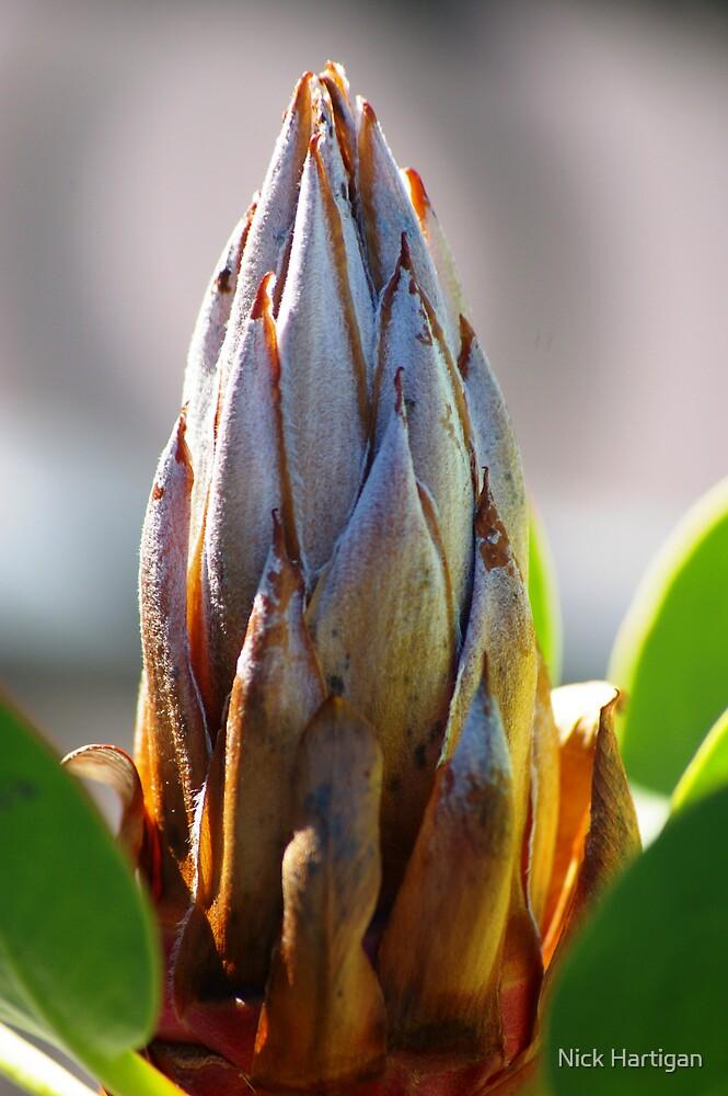 Plant Head by Nick Hartigan