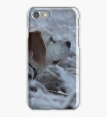Holly the Beagle iPhone Case/Skin