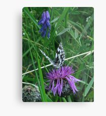 Marble White & Greater Knapweed Metal Print