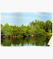 Green Tree Reflections Poster