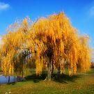 Golden Autumn by minnielee