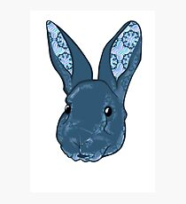 Dr. Squishems the pattern eared bunny Photographic Print