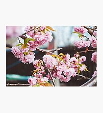 Where fowers bloom, so does hope Photographic Print