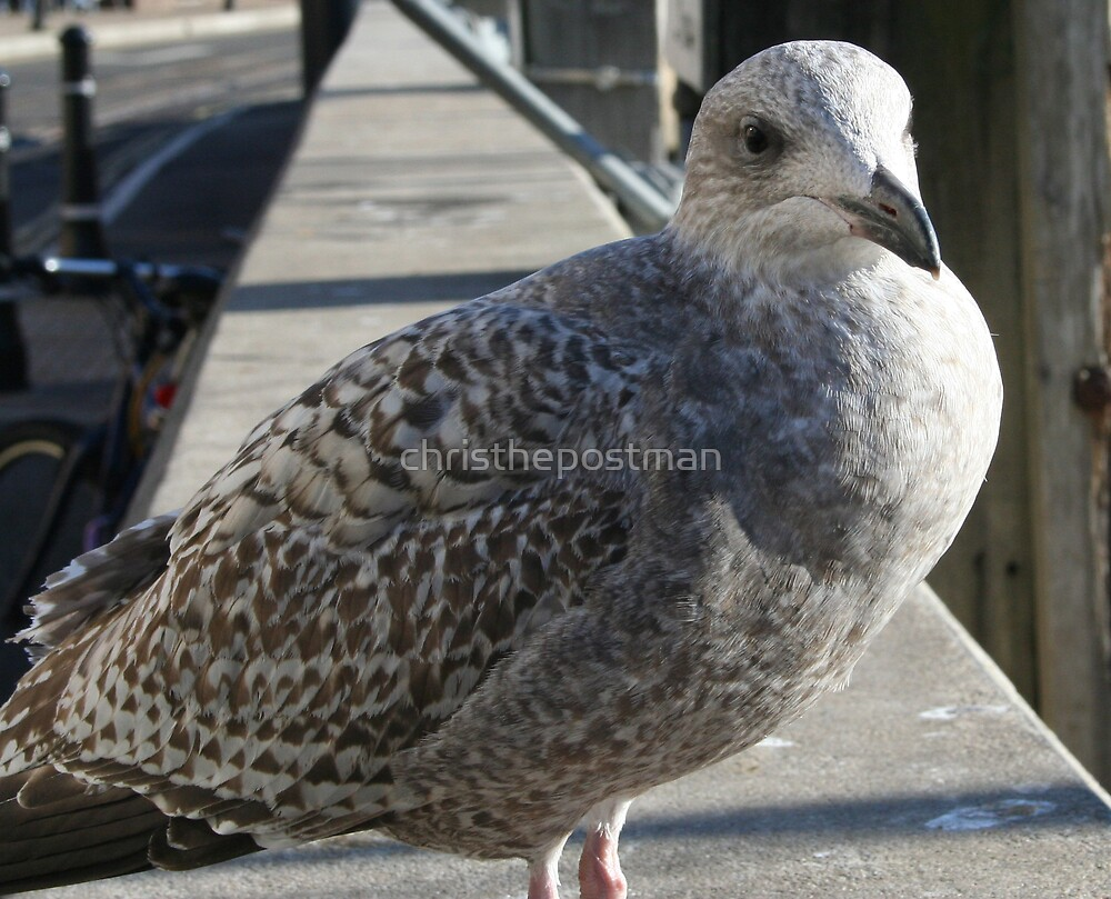 The killer seagull by christhepostman