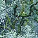 Safari Blossom by photoartful
