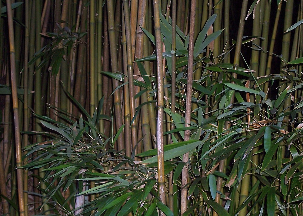 The old bamboo by jaedco