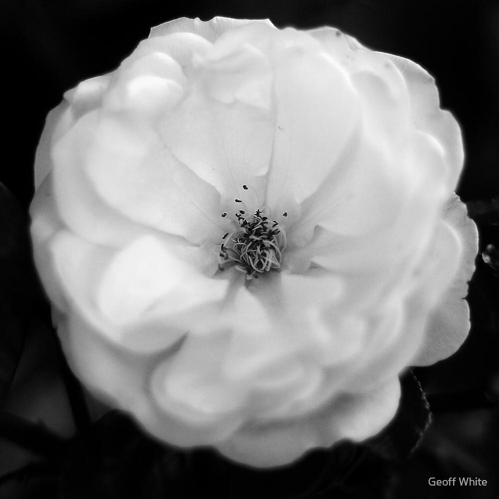 White by Geoff White