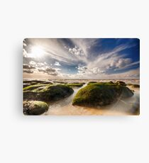 Beautiful seaweed rock outcrops on Norfolk coast Canvas Print