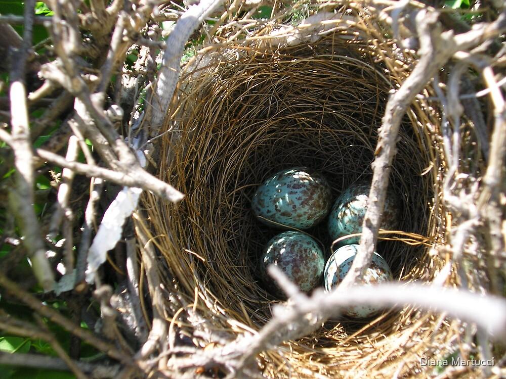 Bird's Nest by Diana Martucci