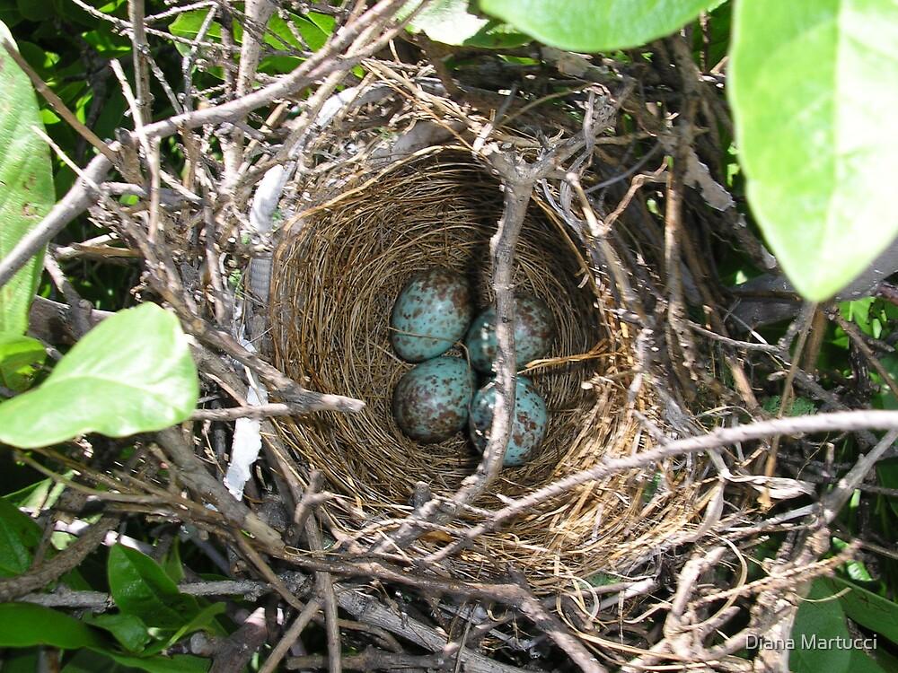 Bird's Nest 2 by Diana Martucci