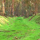 Abbey Buggy Grass Rug by photoartful