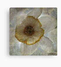 WITHERED DAFFODIL Canvas Print