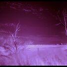 Purple Haze by Craig Shillington