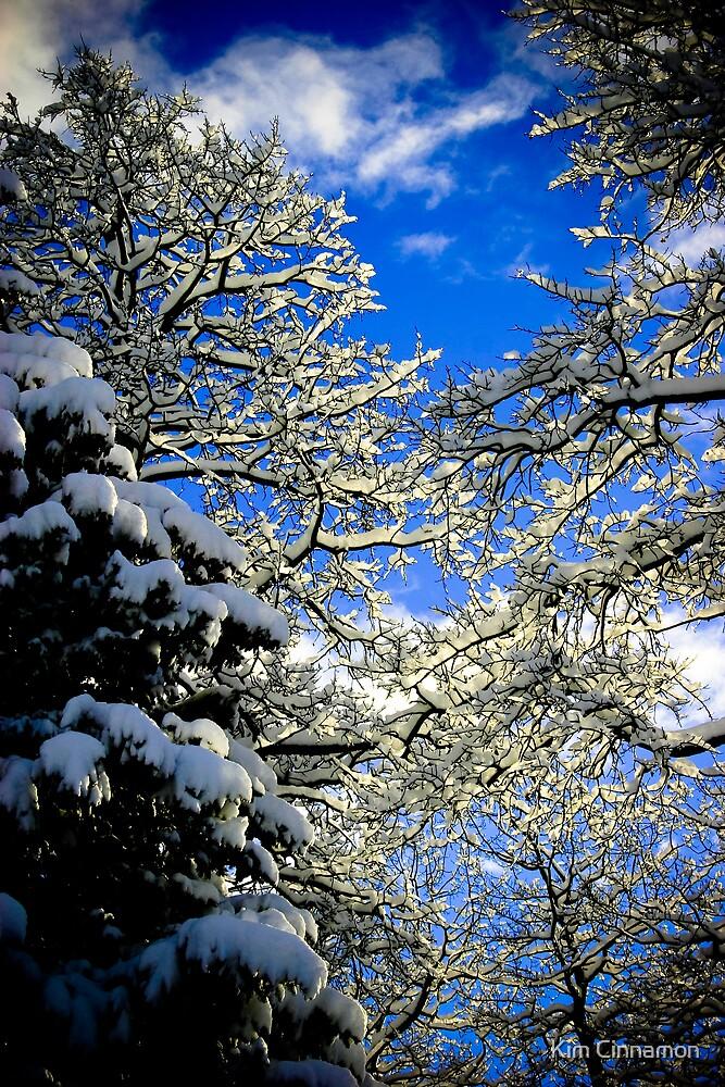 Winter Sun by Kim Cinnamon