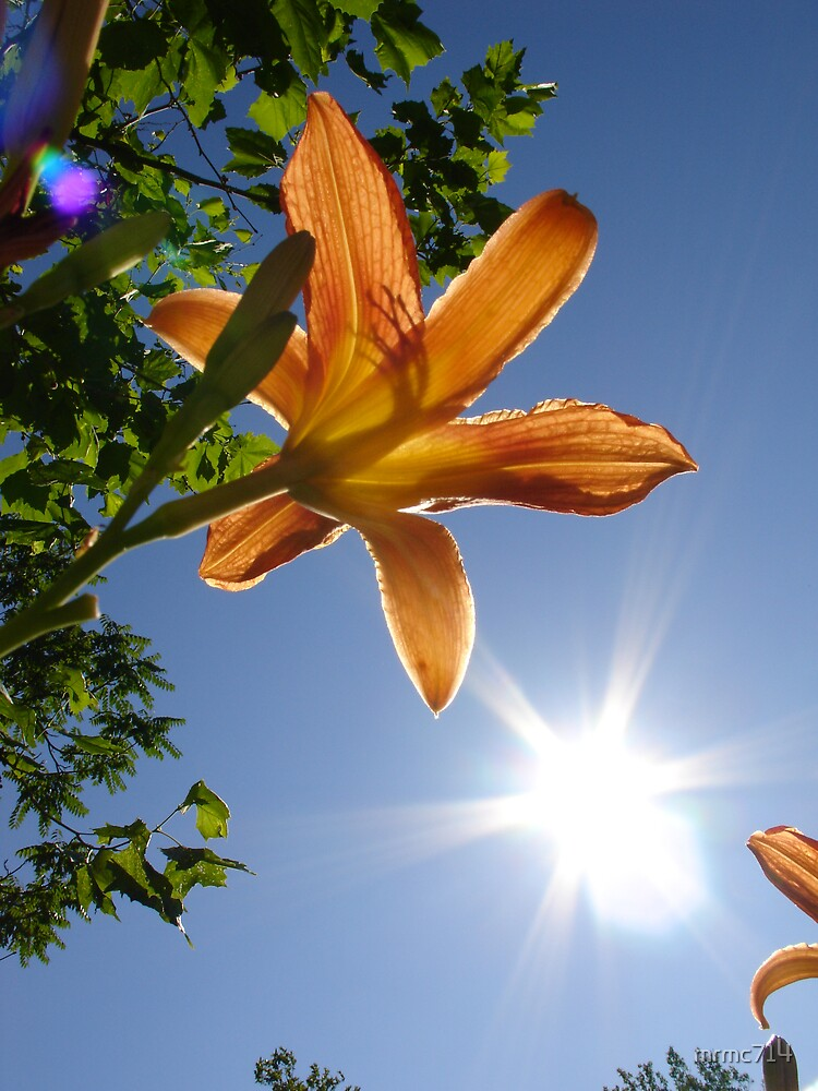 orange flower 2 by mrmc714