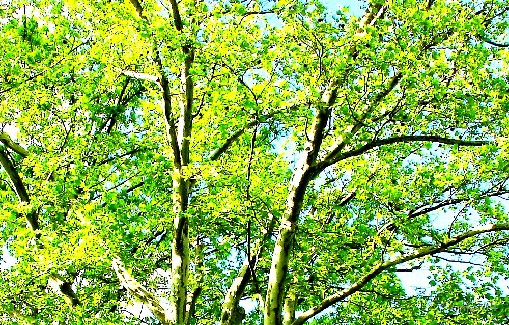green yellow trees by mrmc714