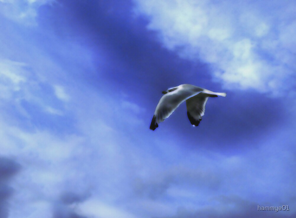 Painted Gull by hammye01