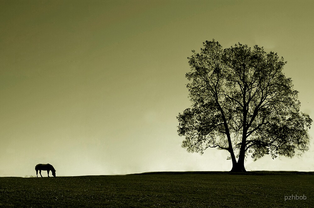 the lonely horse and the tree by pzhbob