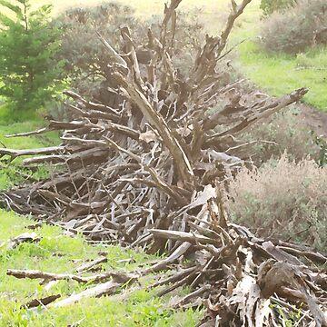 Shattered Fallen Tree by photoartful