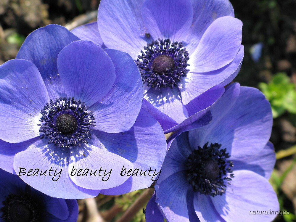 Beauty beauty  beauty by naturalimages