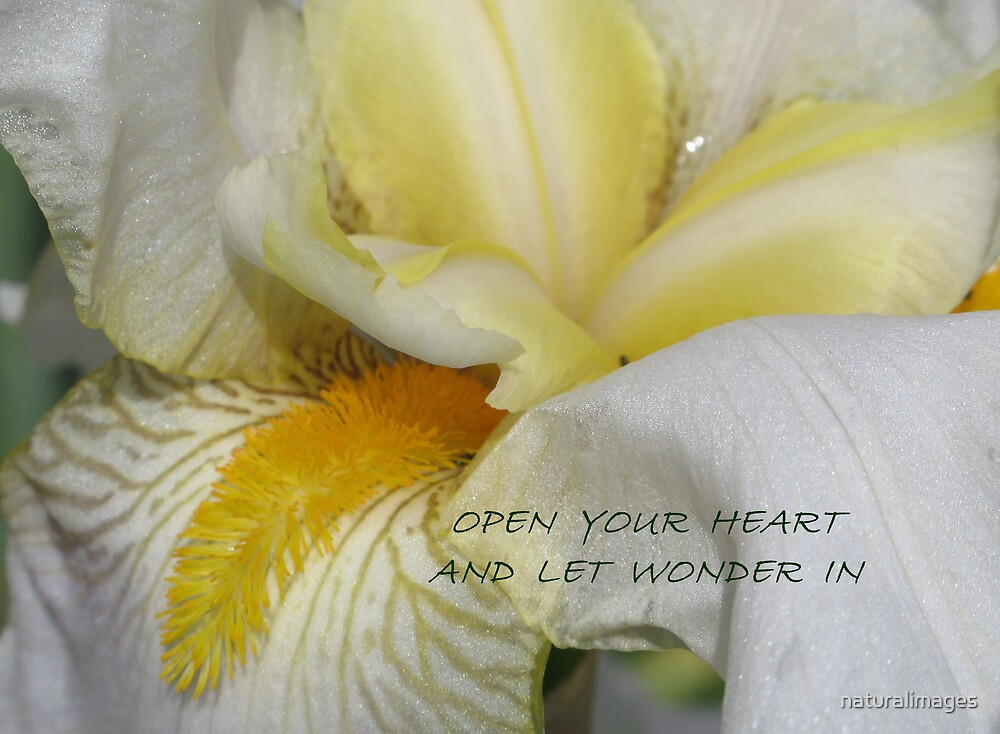 Open your heart and let wonder in by naturalimages