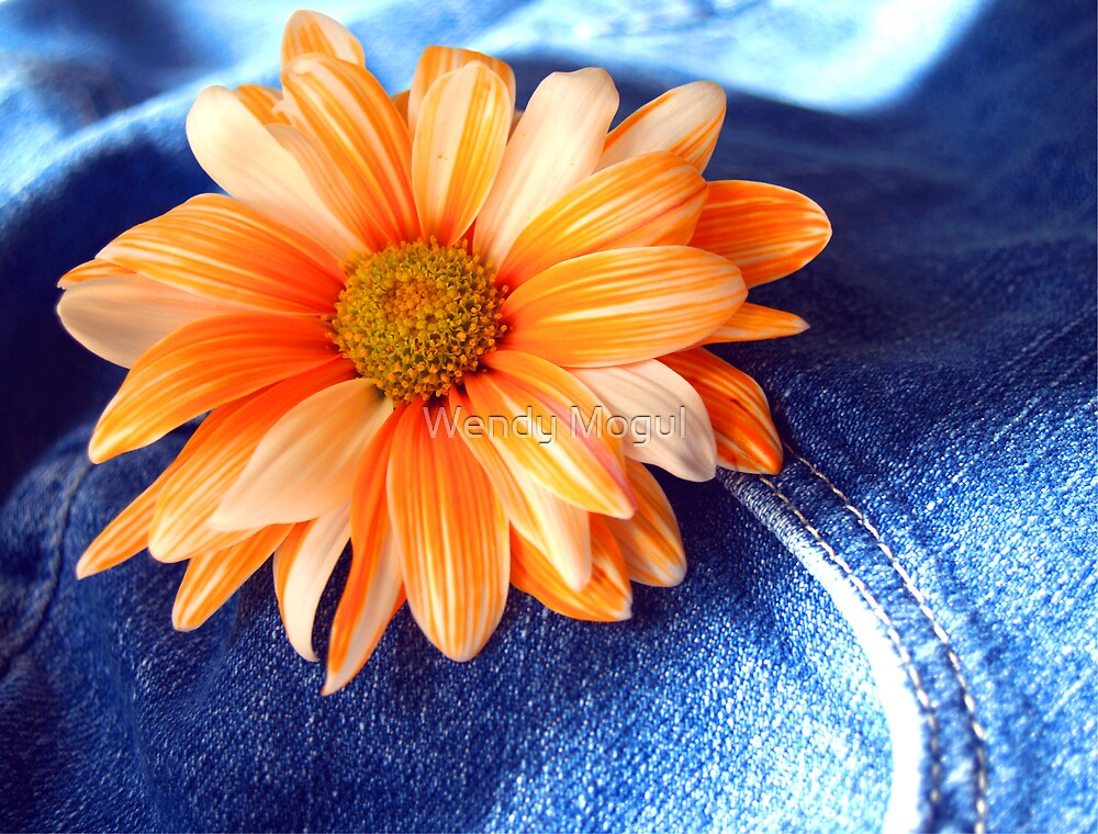 Blue Jeans and Daisy's!!!! by Wendy Mogul