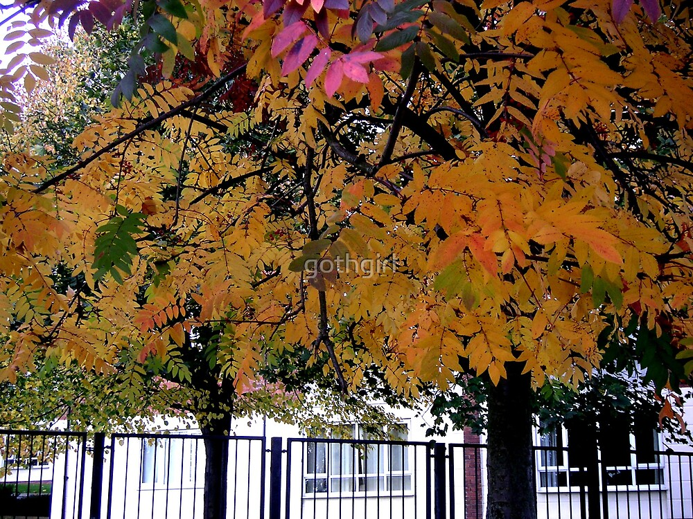 Autumn leaves in England by gothgirl