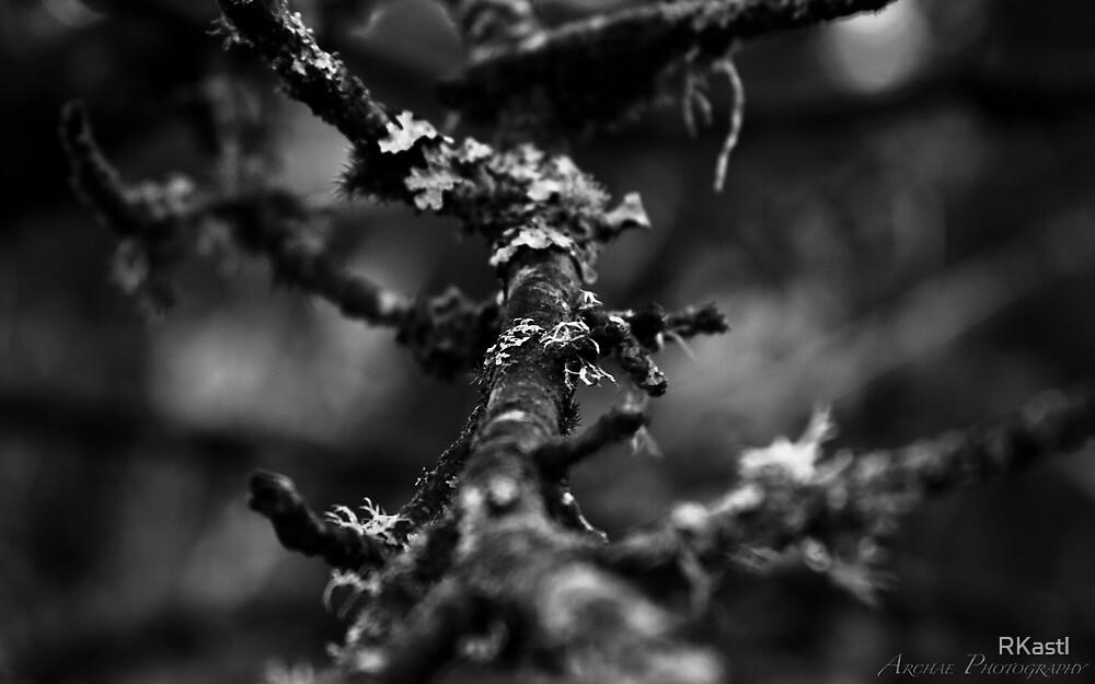Autumn #2 by RKastl