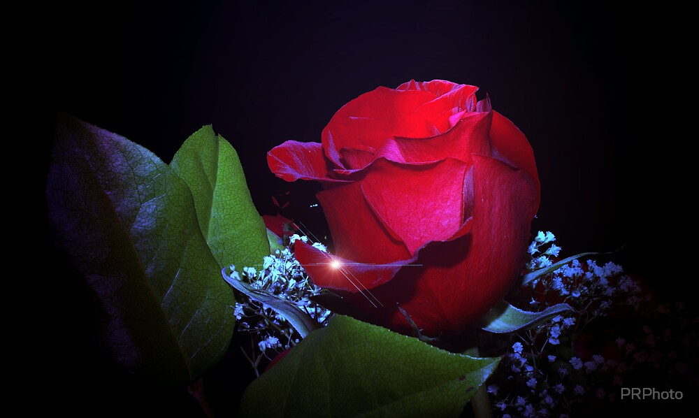 rose by PRPhoto