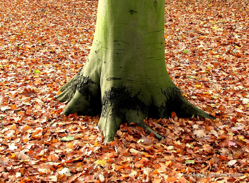 Fall at your feet.. by Sandeep Tattamangalam