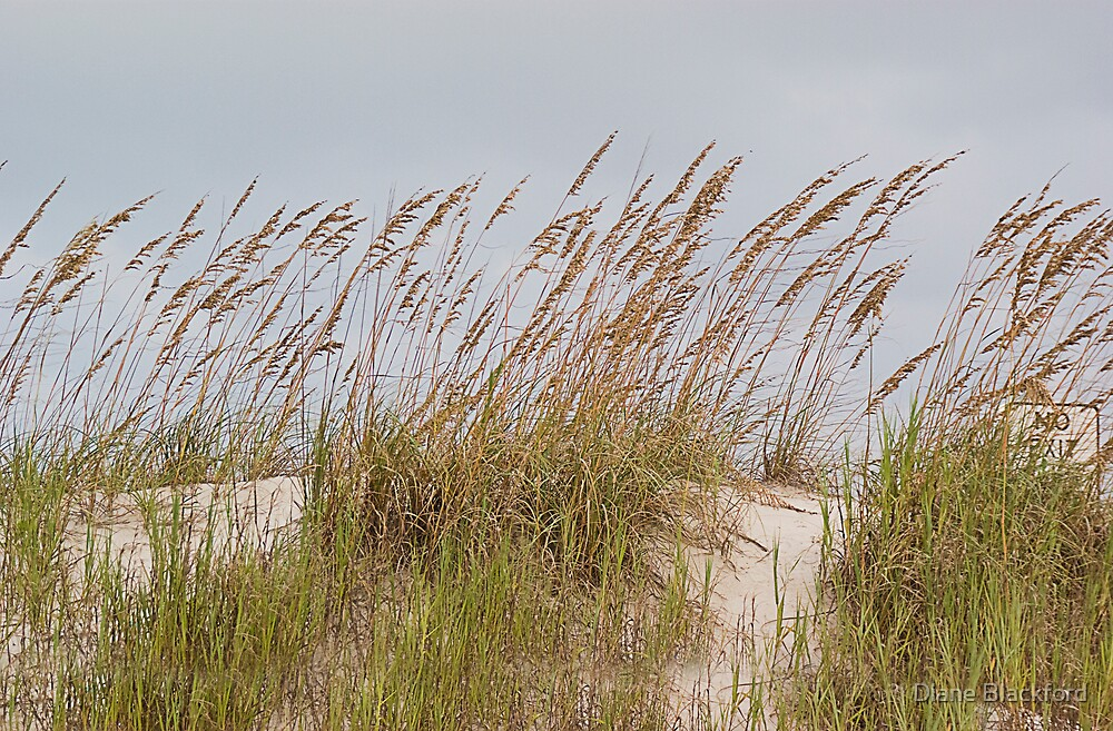 Sea Oats by Diane Blackford
