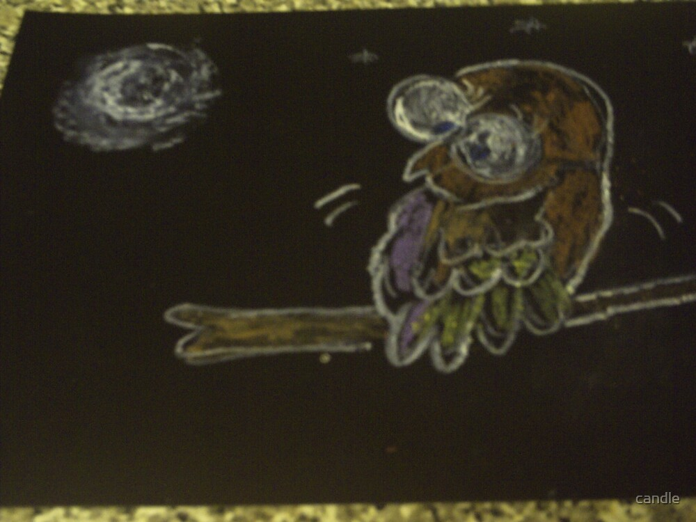 A night time owl  a little feared by the moon lit night by candle