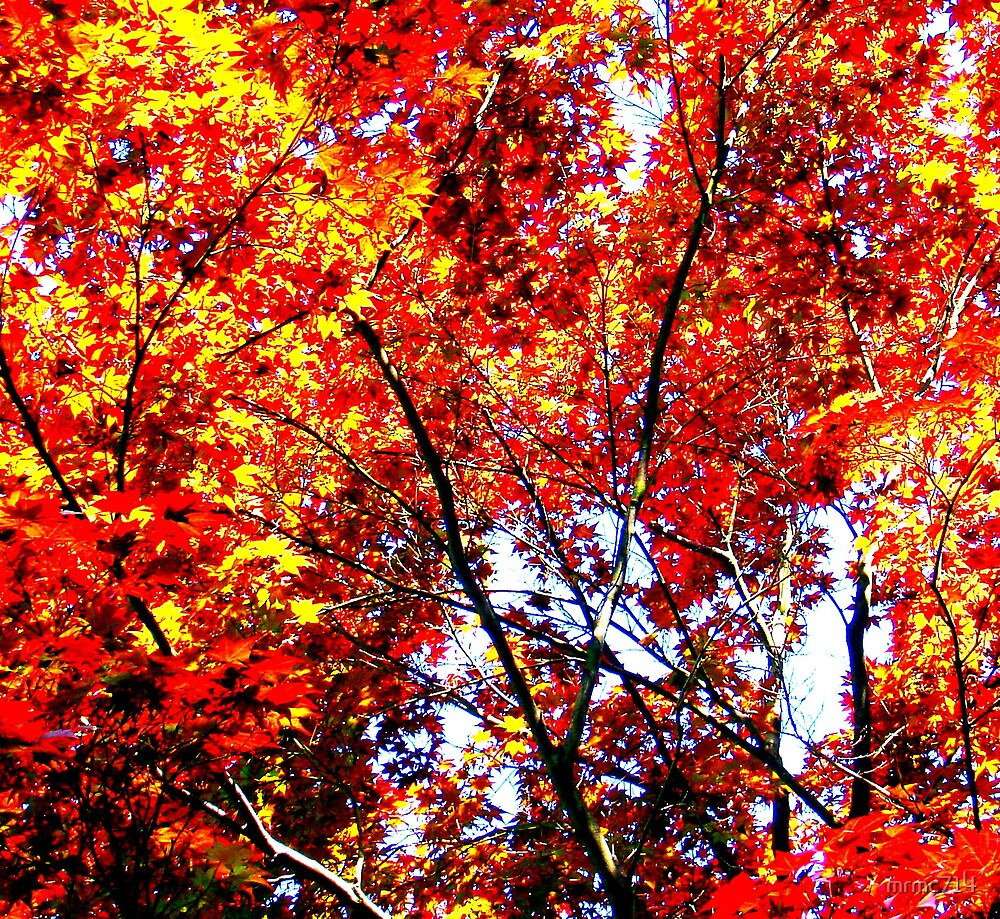 red leaves by mrmc714