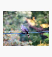 Finch on power line Photographic Print
