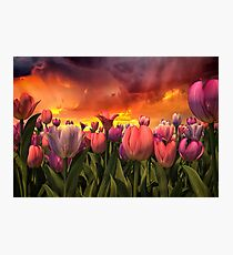 Pastel Tulips In Spring Time  Photographic Print