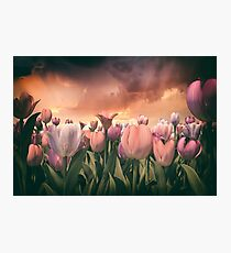 Pastel Tulips In Spring Time 2 Photographic Print