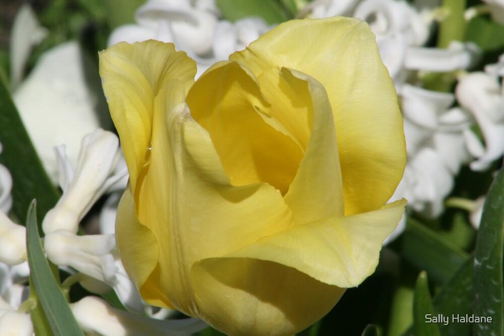 Yellow Teardrop by Sally Haldane