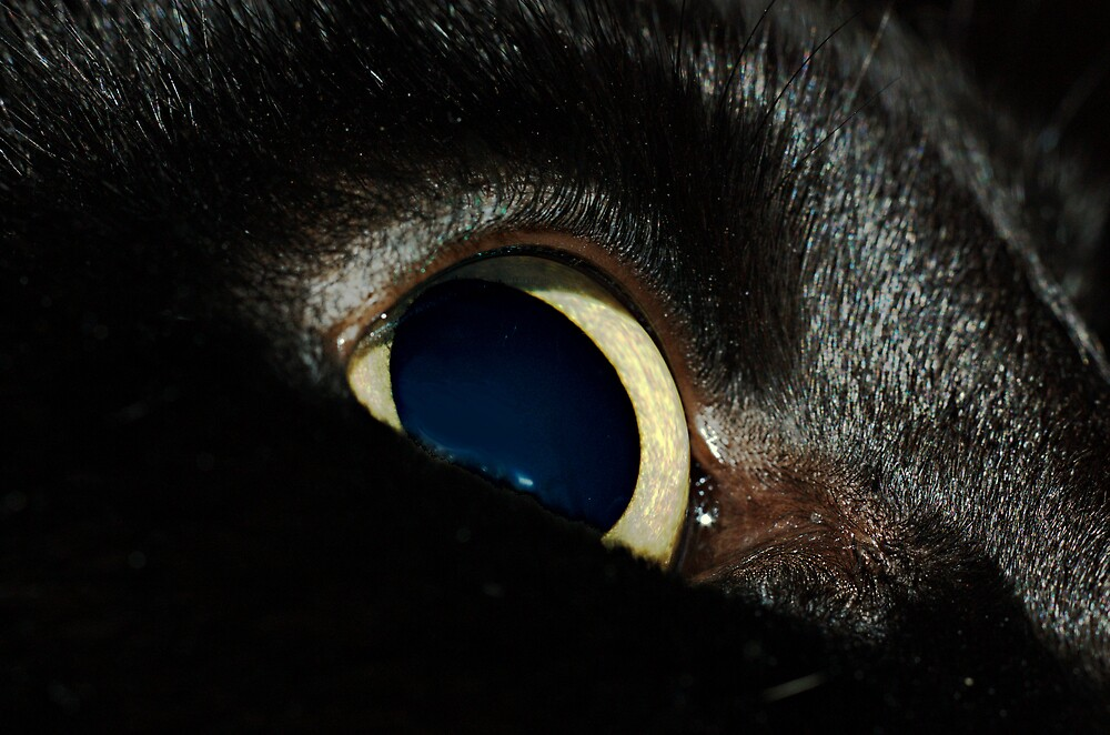 Cats Eye by David  Hall
